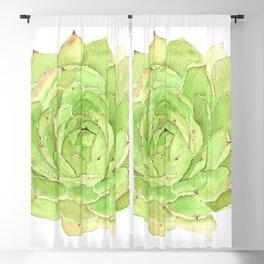 Echeveria Elegans Watercolor art Blackout Curtain