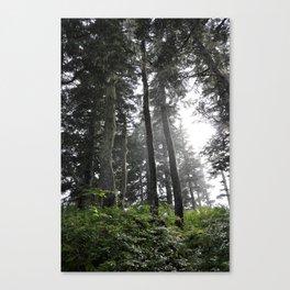 Juneau forest Canvas Print