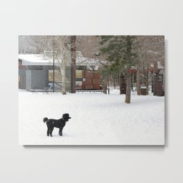 Snow Dogs III Metal Print