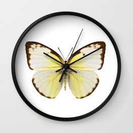 "Butterfly species Catopsilia pomona ""Lemon Emigrant"" Wall Clock"