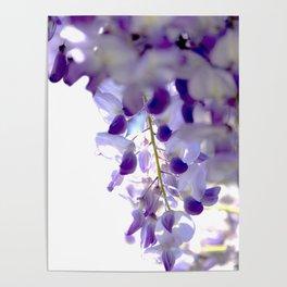 wisteria Poster
