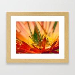 Katydid peeking out of Gerbera Daisy Framed Art Print