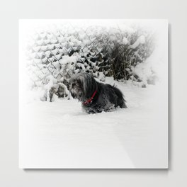 Cold feet Metal Print