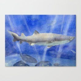 Shark Watercolor Painting Canvas Print