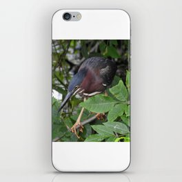 Green Heron on the Hunt iPhone Skin