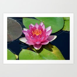 Waterlily with Friends Art Print