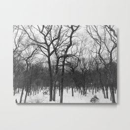 Hamptons Black and White Snowy Winter Woods Metal Print