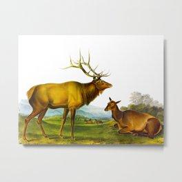 Elk Vintage Scientific Animal Illustration Metal Print