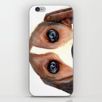 beagle iPhone & iPod Skins featuring Beagle by Carmen Lai Graphics