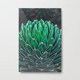 nature poster. succulent close-up Metal Print