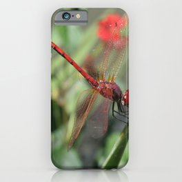 Red Skimmer or Firecracker Dragonfly iPhone Case