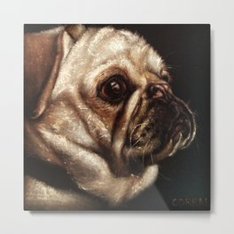 Pug Celebrated in Black Velvet Metal Print