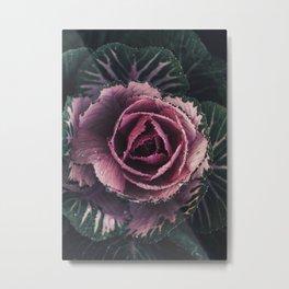 Pink Rosette Metal Print
