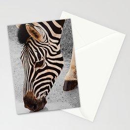 African Wildlife: Zebra 1 Stationery Cards