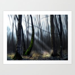 Searching the light Art Print