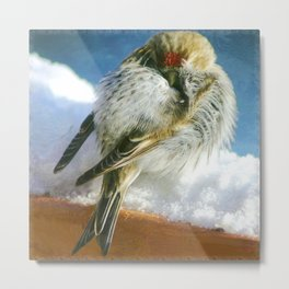 Cold Redpoll Metal Print