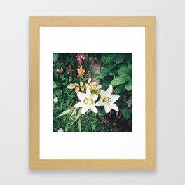 Beautiful Garden colours Framed Art Print
