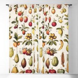 Adolphe Millot - Fruits exotiques - French vintage botanical illustration Blackout Curtain