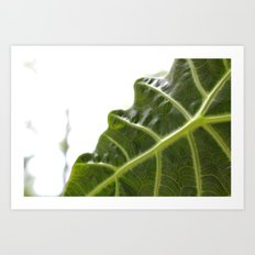 Leaf Close-up Art Print