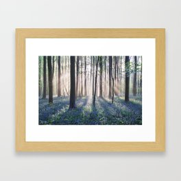The Forbidden Forest Framed Art Print