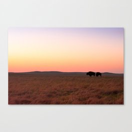 Buffalo Roam Canvas Print