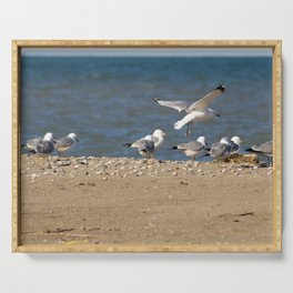 Landing | Seagull Photography Serving Tray