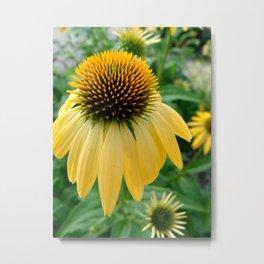 Yellow Echinacea/Coneflower Metal Print