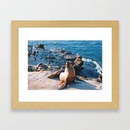 La Jolla Seals Framed Art Print