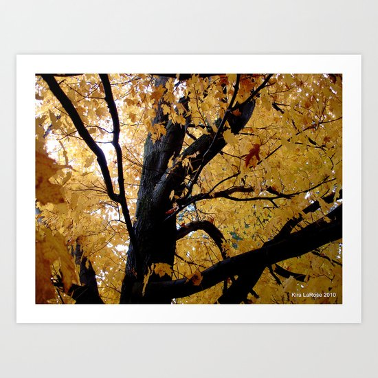 October branches Art Print