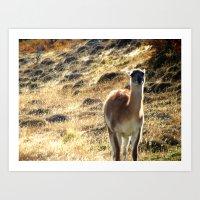llama Art Prints featuring Llama by Tia_Mala_Onda