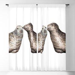 Grey seals(Halichoerus grypus) Blackout Curtain