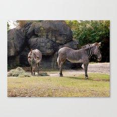 Magestic Zebras Canvas Print