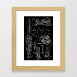 A Compilation – Cephalopods (Inverted) Framed Art Print