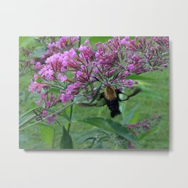 Hummingbird Moth Metal Print