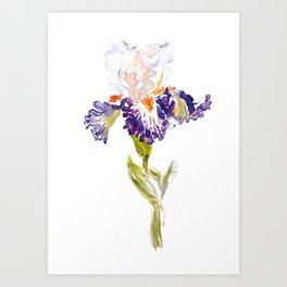 Iris in Watercolor Art Print