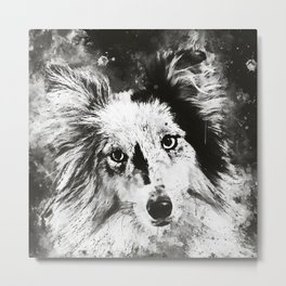 border collie dog 5 portrait wsbw Metal Print