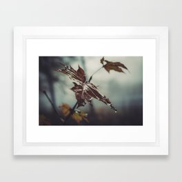 Maple leaf Framed Art Print