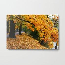 Orange Mapple Leaves Metal Print
