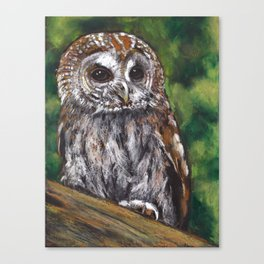 Tawny Owl, Oil Pastel Painting, Wildlife Canvas Print