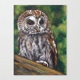 Tawny Owl, Oil Pastel Painting, Wildlife Canvas Print