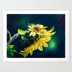 Sunflower At Sunrise Art Print