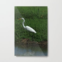 Great White Heron Walking Metal Print