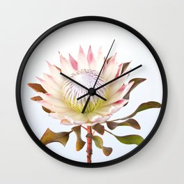 King Protea Wall Clock