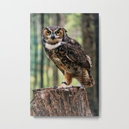Majestic Owl Stare Metal Print
