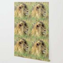Leo Panthera African lion Wallpaper