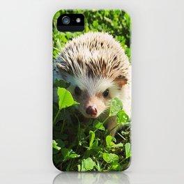Juni Hedgehog Clovers iPhone Case