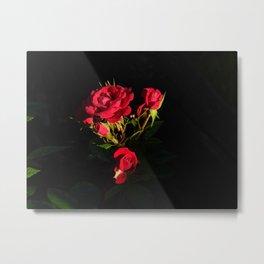 Shadow of Roses Metal Print