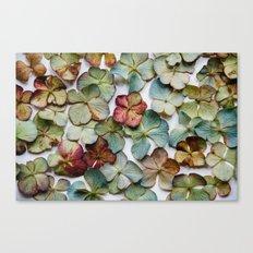 Hydrangea Petals no. 1 Canvas Print