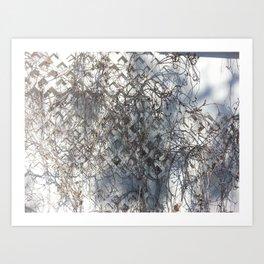 Dead Ivy Art Print