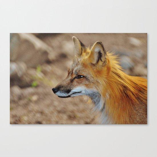 Inquisitive Mr. Fox Canvas Print